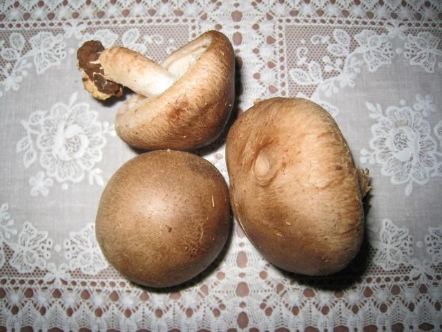 南山的蘑菇 - 我们新疆好地方