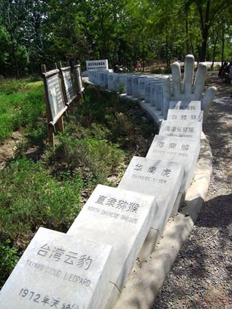 世界灭绝动物墓地墓志铭 图片合集