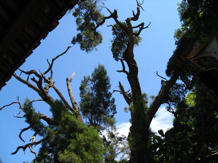终于登顶泸山-绿森林之家-搜狐博客