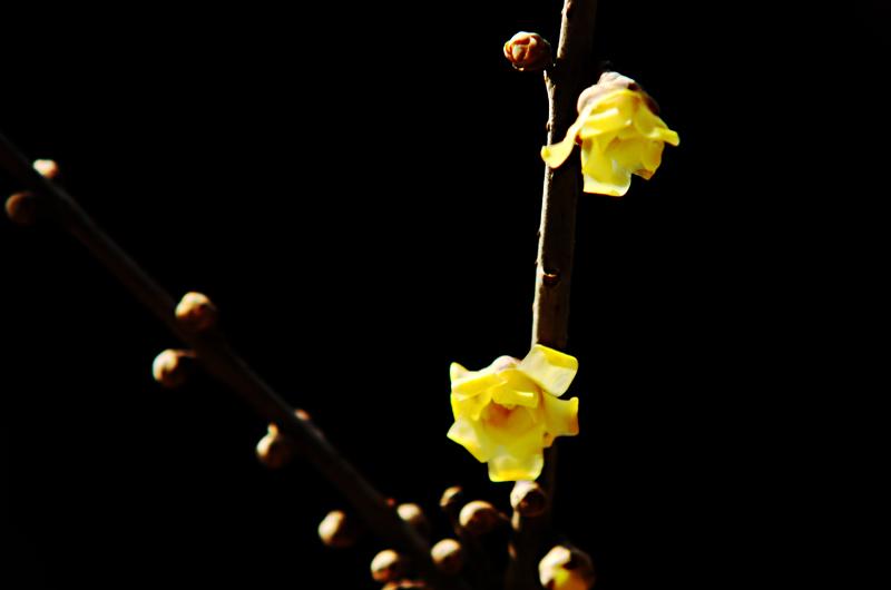 然而今年还刚刚开出点点的花朵