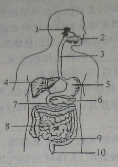 大肠形态结构图