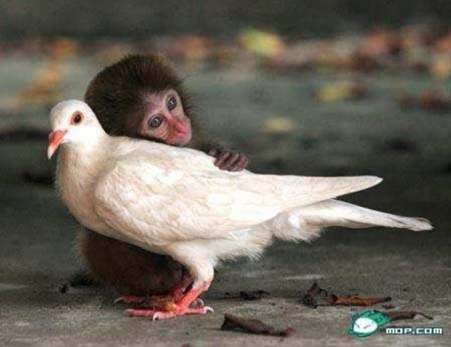 动物和动物是好朋友-opening-我的搜狐