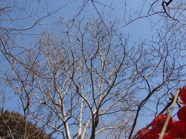 我和面塑交朋友2009-01-27_爱的人间大树课说课稿图片