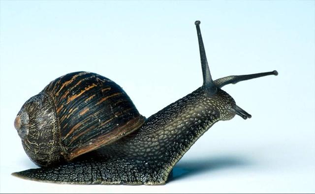 蜗牛攀爬金字塔图片