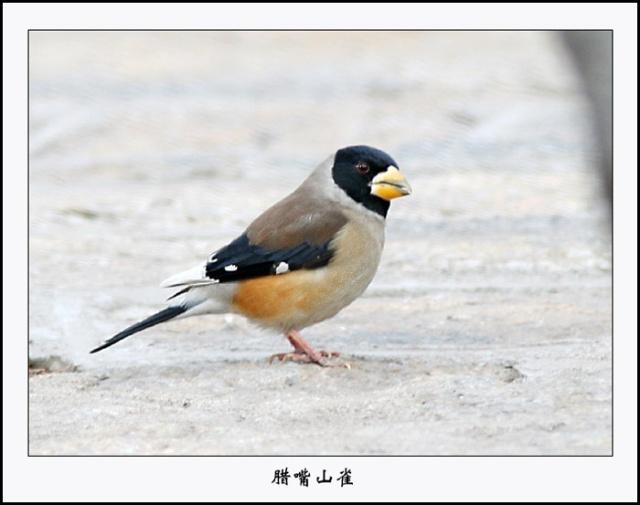 一家人也在小鸟的歌声中开始崭新一天的生活.