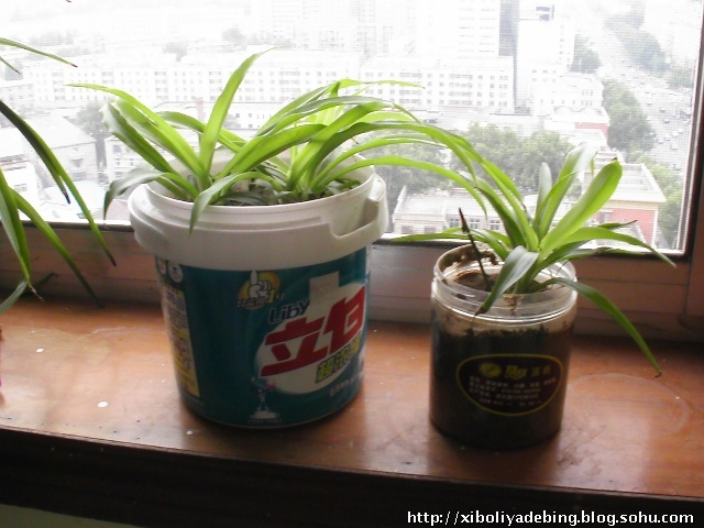 塑料油桶做吊兰花盆