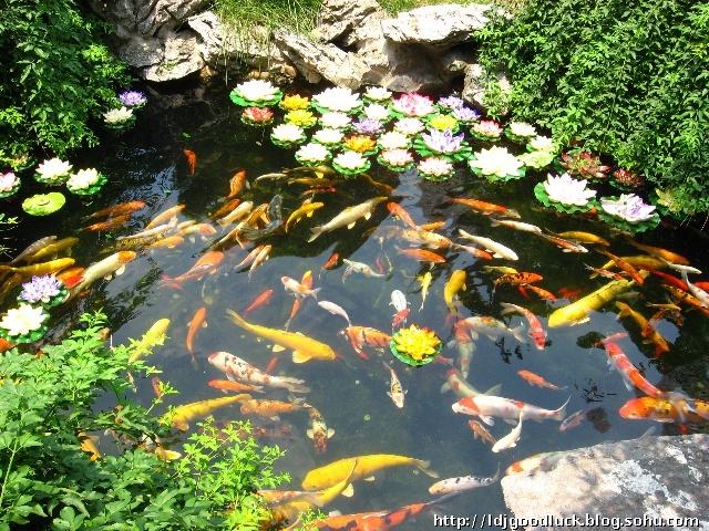 庭院养鱼池设计图