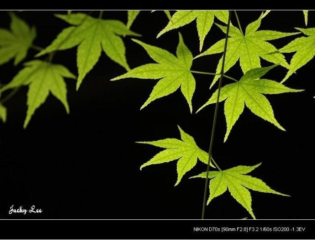 自然光源    摄影的光源若按照光源的形式,可分为自然光源与人工光源两大类。自然光源中色彩因素的变化较大,且较不易控制;而摄影专用人工光源在本质上不论在光的质、量与色彩方面,均较容易受人为的控制,所以人工光源是影楼专业摄影者乐于采用的光源。    自然光源大体上而言是指太阳光,它是自然界中最大的光源,也是摄影者最常使用的光源,更是变化多端的光源。太阳光会随时间、地点、季节、天候、角度等因素而变化其质、量与色彩等。由于变化因素多,所以是表情最丰富的光线,对摄影者而言,充满了挑战的趣味。    日出与日