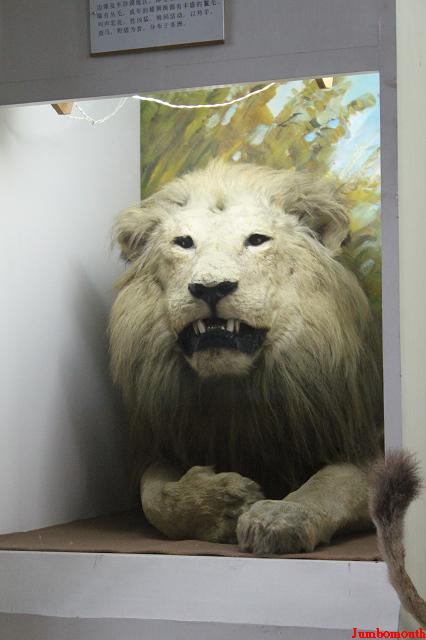 在鲸鱼大箱子后面的狮子,小时候的梦魇,怎么你发白了不少.