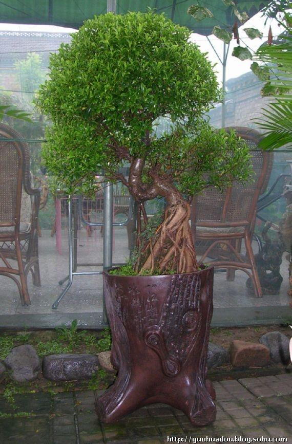 壁纸 盆景 盆栽 树 植物 570_864 竖版 竖屏 手机