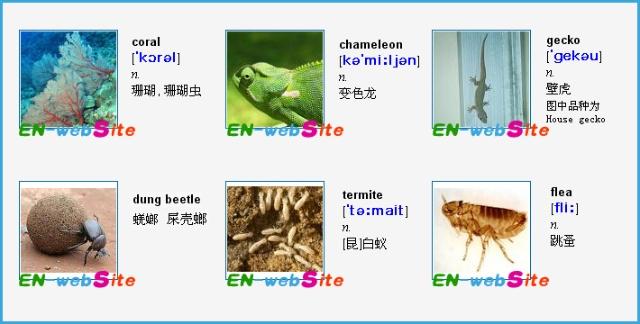 动物的英文单词大全【相关词_水果的英语单词大全】