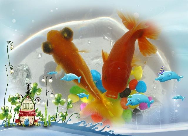 了一条可爱的小金鱼